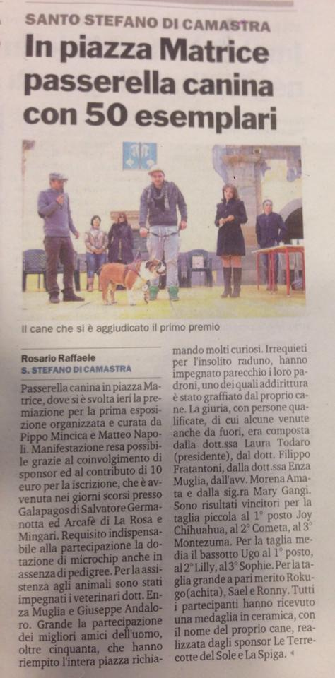 articolo cani